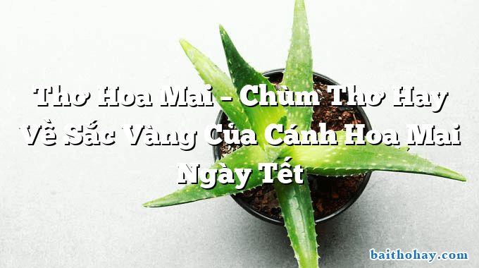 Thơ Hoa Mai – Chùm Thơ Hay Về Sắc Vàng Của Cánh Hoa Mai Ngày Tết