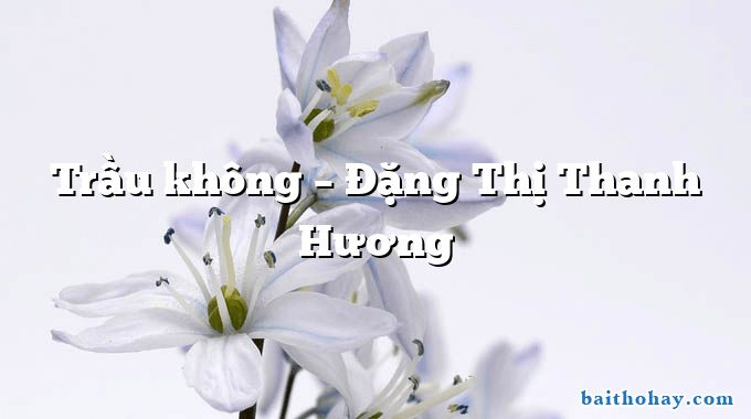 Trầu không  –  Đặng Thị Thanh Hương