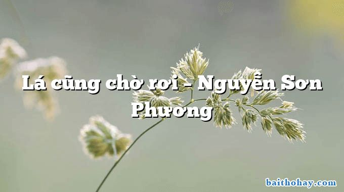 Lá cũng chờ rơi – Nguyễn Sơn Phương
