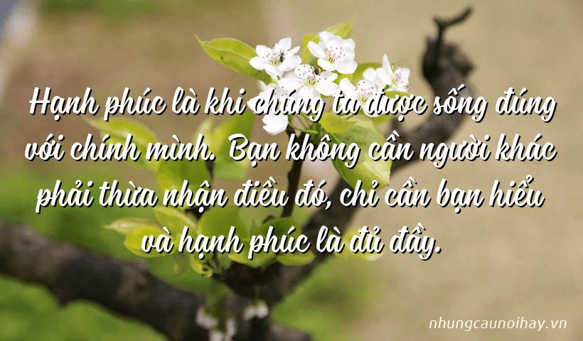 tong hop nhung cau noi hay ve su hanh phuc trong cuoc song noi tieng nhat 11 - Tổng hợp những câu nói hay về sự hạnh phúc trong cuộc sống nổi tiếng nhất