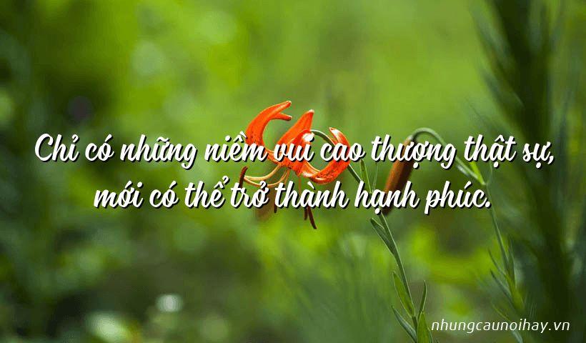 tong hop nhung cau noi hay ve su hanh phuc trong cuoc song noi tieng nhat 13 - Tổng hợp những câu nói hay về sự hạnh phúc trong cuộc sống nổi tiếng nhất