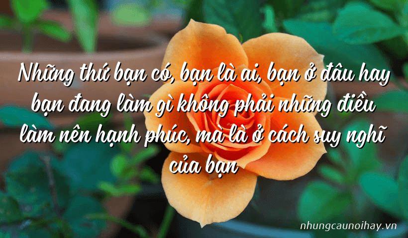 tong hop nhung cau noi hay ve su hanh phuc trong cuoc song noi tieng nhat 14 - Tổng hợp những câu nói hay về sự hạnh phúc trong cuộc sống nổi tiếng nhất