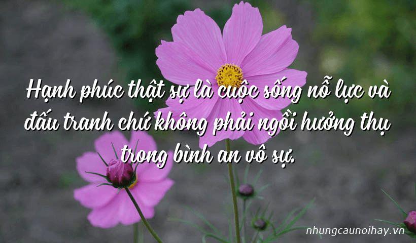 tong hop nhung cau noi hay ve su hanh phuc trong cuoc song noi tieng nhat 16 - Tổng hợp những câu nói hay về sự hạnh phúc trong cuộc sống nổi tiếng nhất