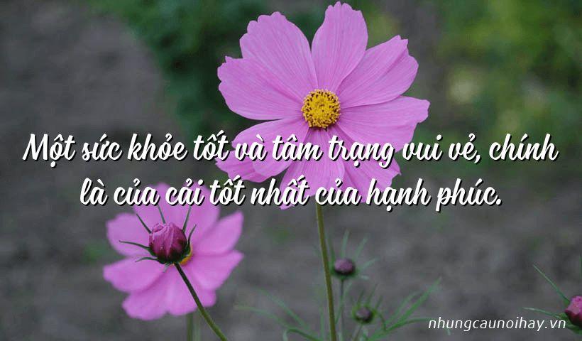 tong hop nhung cau noi hay ve su hanh phuc trong cuoc song noi tieng nhat 17 - Tổng hợp những câu nói hay về sự hạnh phúc trong cuộc sống nổi tiếng nhất