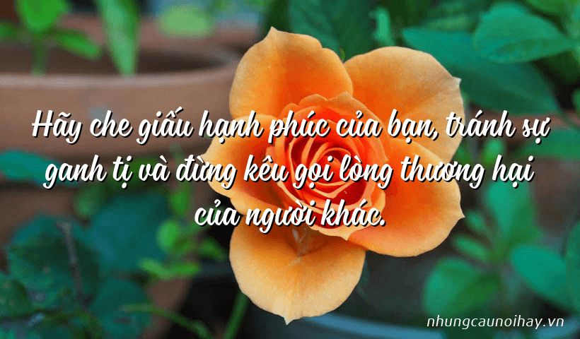 tong hop nhung cau noi hay ve su hanh phuc trong cuoc song noi tieng nhat 8 - Tổng hợp những câu nói hay về sự hạnh phúc trong cuộc sống nổi tiếng nhất