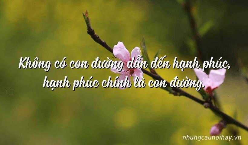 tong hop nhung cau noi hay ve su hanh phuc trong cuoc song noi tieng nhat - Áo trắng má hồng -  Nguyễn Duy